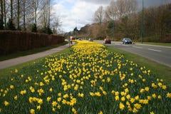 Camino en primavera Imagen de archivo