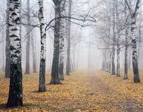 Camino en profundamente parque del abedul del otoño de la niebla Fotografía de archivo