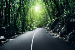 Camino en selva Imagen de archivo