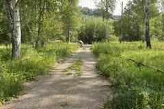 Camino en Siberia, parque nacional de Shulgan-Tash Imagenes de archivo