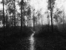 Camino en un bosque imagen de archivo libre de regalías