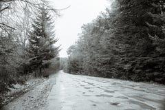 Camino en un bosque brumoso Imagen de archivo libre de regalías