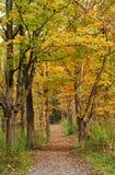 Camino en un bosque del otoño imagenes de archivo