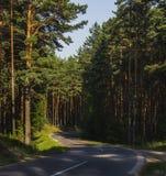 Camino en un bosque del pino Fotografía de archivo
