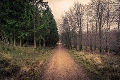 Camino en un bosque en el amanecer Fotografía de archivo libre de regalías