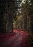 Camino en un bosque hermoso Fotografía de archivo libre de regalías