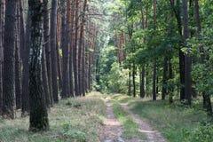 Camino en un bosque hermoso Fotos de archivo