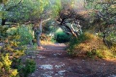 Camino en un bosque místico Fotos de archivo