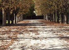 Camino en un bosque o en un parque Foto de archivo libre de regalías
