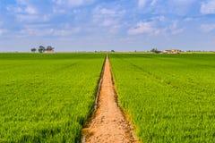 Camino en un campo Foto de archivo