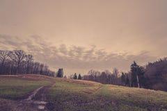 Camino en un campo por un bosque Imagen de archivo libre de regalías