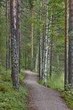 Camino en un desierto de la naturaleza de Finlandia del bosque del abedul Fotos de archivo
