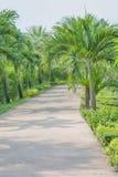 Camino en un jardín Imagen de archivo libre de regalías
