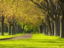 Camino en un parque Fotos de archivo