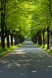 Camino en un parque con la fila de árboles Fotos de archivo