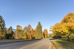 Camino en una calle del otoño con los árboles y las hojas caidas Fotos de archivo
