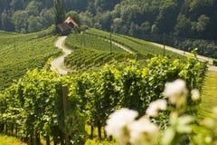 Camino en una forma de un corazón, Maribor, Eslovenia del vino Foto de archivo libre de regalías