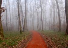 Camino en una madera con niebla imagen de archivo