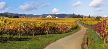 Camino en wineyards Foto de archivo libre de regalías