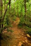 Camino encima de la colina en maderas Fotografía de archivo