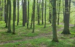Camino entre árboles en el bosque de la primavera Imagen de archivo libre de regalías