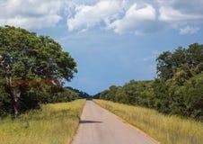 Camino entre Botsuana y Zimbabwe foto de archivo libre de regalías