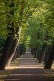 Camino entre el callejón de árboles que se inclinan Fotografía de archivo libre de regalías