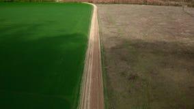 Camino entre el campo amarillo y verde almacen de video