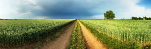 Camino entre el campo de trigo verde con la tormenta y el árbol, panorama Fotos de archivo libres de regalías