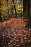 Camino entre los árboles cubiertos con las hojas de oro fallowed en la tierra en un bosque hermoso del otoño imágenes de archivo libres de regalías