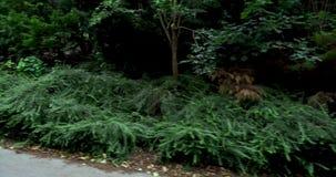 Camino entre los árboles verdes de los árboles verdes en el pueblo de las tierras del verde de Alemania de los fondos hermosos de metrajes