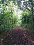 Camino entre los arbustos Foto de archivo