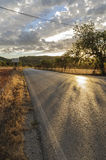 Camino entre los campos Foto de archivo