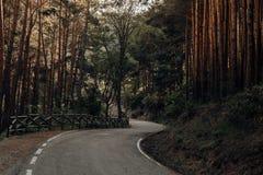 Camino entre los pinos en las montañas en el norte de España foto de archivo libre de regalías