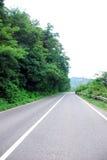 Camino entre los árboles y la hierba en el borde de la carretera Imágenes de archivo libres de regalías