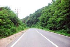 Camino entre los árboles y la hierba en el borde de la carretera Foto de archivo