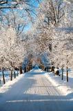 Camino escarchado del invierno con nieve en el invierno frío Foto de archivo
