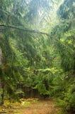 Camino estrecho en bosque Imagen de archivo libre de regalías