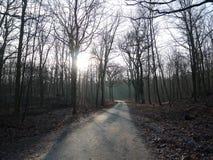 Camino estrecho en bosque Fotos de archivo libres de regalías