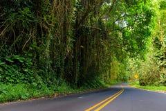 Camino famoso a Hana cargada con los puentes estrechos del uno-carril, las vueltas y las opiniones increíbles de la isla, camino  Imagen de archivo libre de regalías