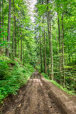 Camino fangoso de la montaña en el bosque Foto de archivo