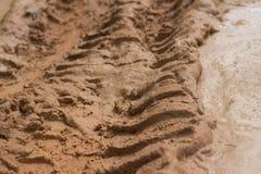 Camino fangoso horizontal de la selva del ECU de la opinión de nivel del suelo con la piscina del fango y de las pistas nudosas d Imagenes de archivo