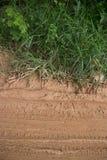 Camino fangoso vertical de la selva con la vegetación frondosa en la parte superior Foto de archivo