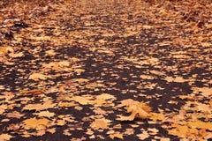 Camino flojo del otoño con las hojas amarillas del arce, del abedul, del roble y del álamo temblón Fotos de archivo libres de regalías