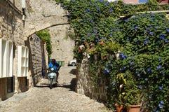Camino florido Foto de archivo libre de regalías