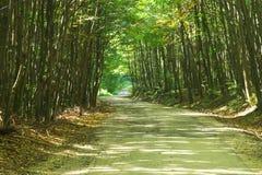 Camino forestal. Imagenes de archivo