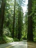 Camino forestal Foto de archivo libre de regalías