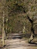 Camino forestal Fotos de archivo