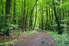 Camino forestal Fotografía de archivo libre de regalías