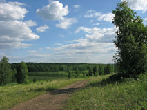 Camino forestal. Imagen de archivo libre de regalías